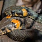 Змея и змея совместимость в постели