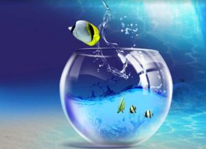 рыбы и дева отношения